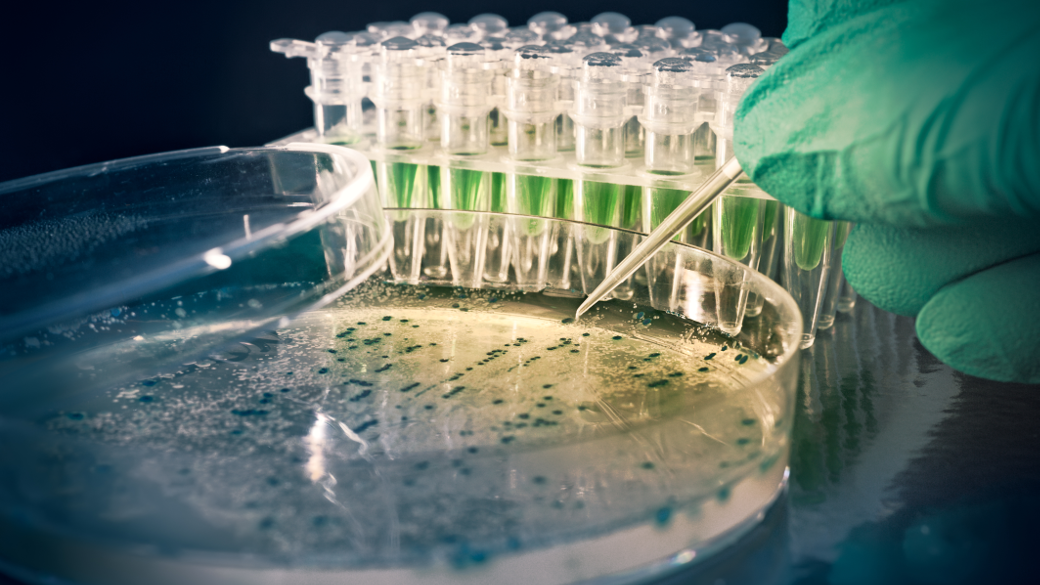 photo: a hand with a green rubber glove is holding a pipette with light liquid above a petri dish; some more laboratory samples of liquids are standing in the background